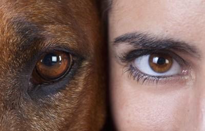 犬と女性の瞳アップ