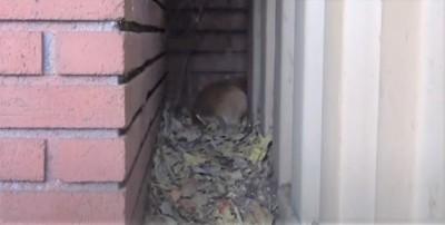 頭を隠す犬