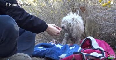 手から食べる犬