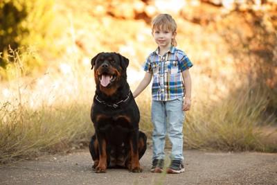 少年の隣に座っている大きな犬
