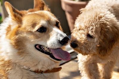 挨拶する犬