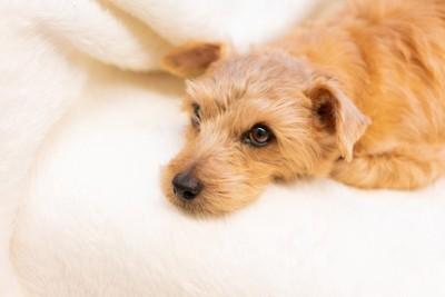 リラックス中の犬