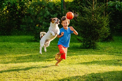 子供とボールで遊んでいるジャックラッセル