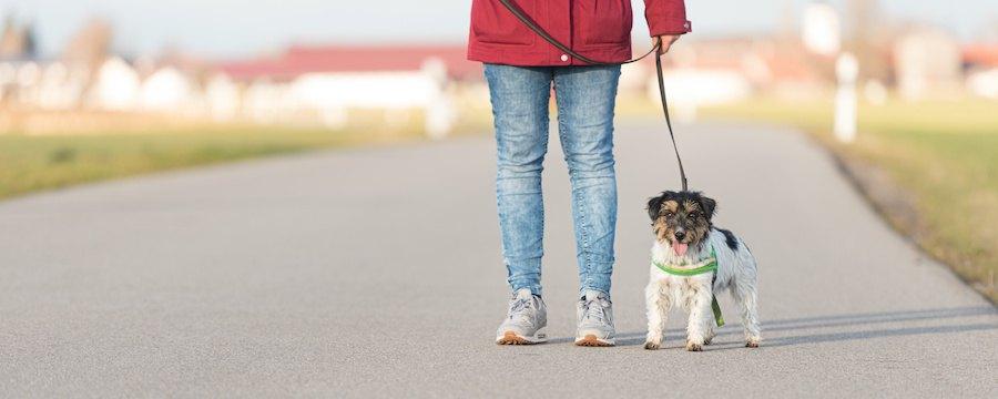飼い主とお散歩中の犬