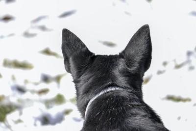 犬の後頭部アップ