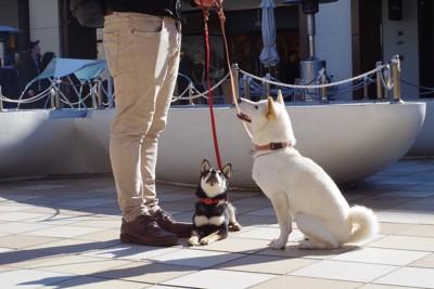 散歩中おすわりしている2匹の犬