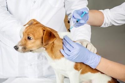 注射をされる犬2