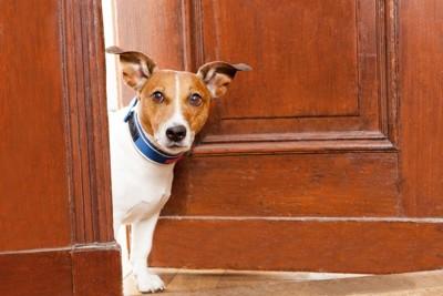 ドアの間から顔を出す犬