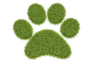草で描いた犬の足跡