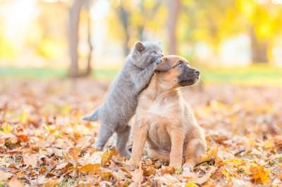 落ち葉の上でジャレ合う子犬と子猫
