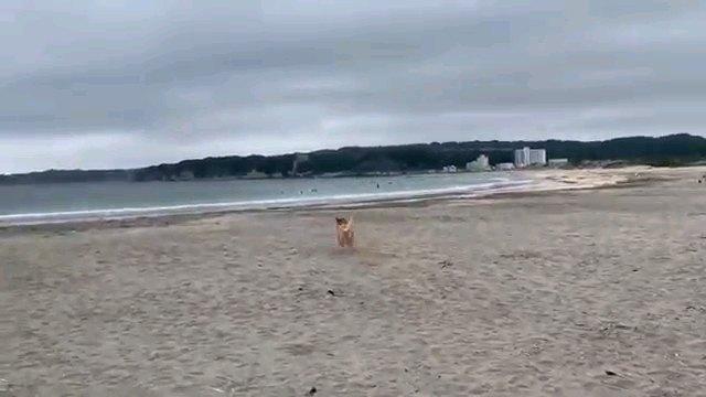 走る犬の後ろ姿
