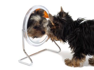 鏡の中の自分を見つめる犬
