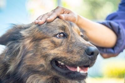 撫でられて幸せそうな犬