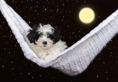 ハンモックに乗った小型犬と月