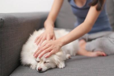 ソファーの上で犬を撫でる女性