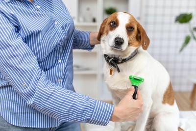 身体をブラッシングされている垂れ耳の犬