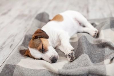 毛布の上でぐったりしている犬