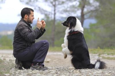 訓練中の犬と男性