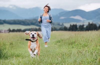草原の中を走る女性と犬