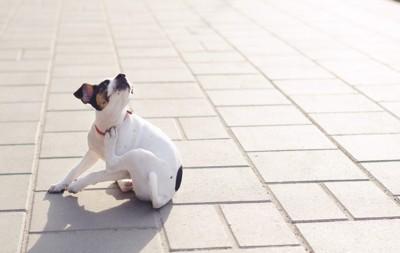 体がかゆい犬