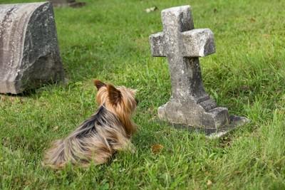 お墓の前に座って見つめる犬