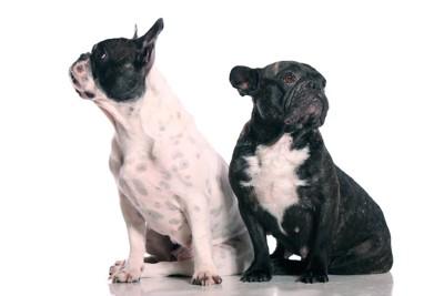 反対方向を見る二匹の犬