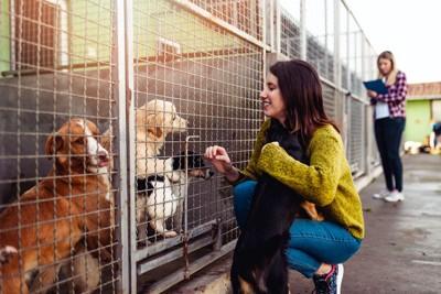 シェルターで網越しに犬を見る女性