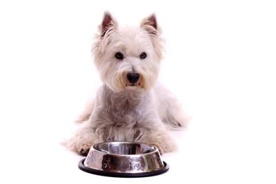 餌の容器の前で座っている犬