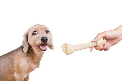 笑顔の犬のガムを持つ人の手
