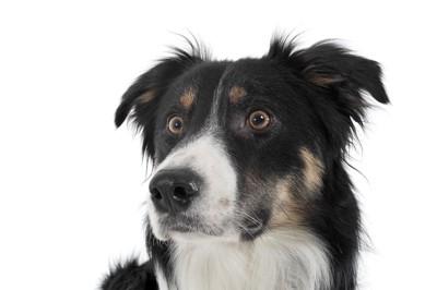 目を見開いている犬