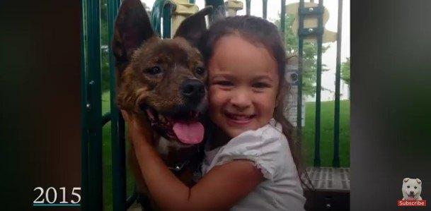 顔を寄せ合う犬と幼児