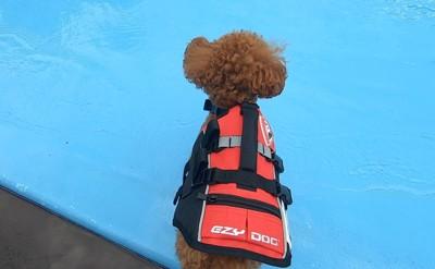 水際に愛犬ジャケット装着真上