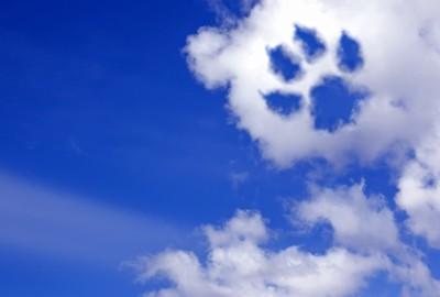 犬の足跡の形の雲
