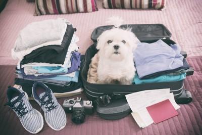 帰省の準備中にスーツケースに入る犬