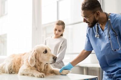 診察台の上のゴールデンレトリーバーと獣医師