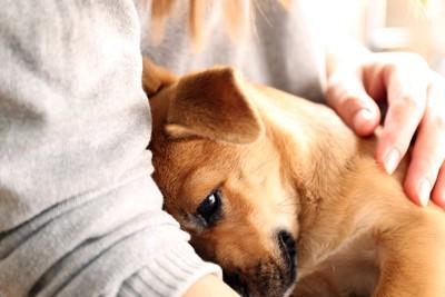 犬に手を添えて抱きしめる女性