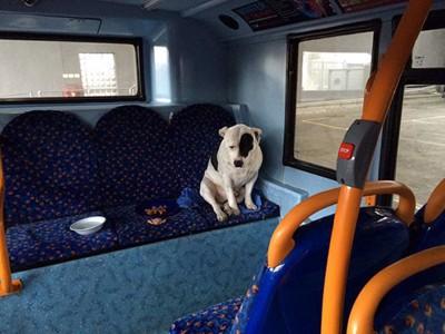 バスの中の椅子に座る犬