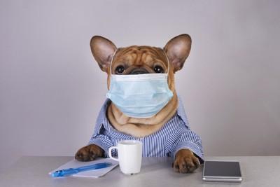 マスクをつける犬