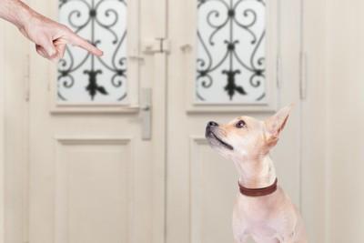 叱る人の手と叱られる犬