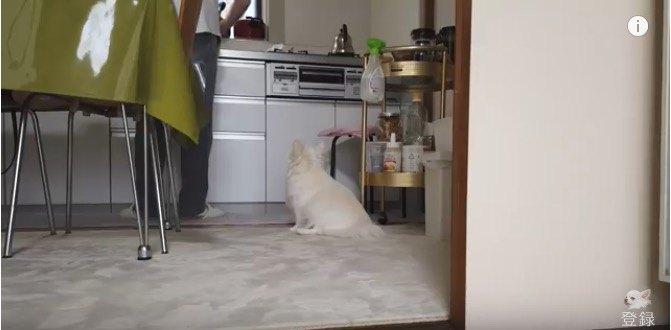 台所に立つと全力で待機
