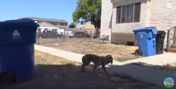 歩道を歩く犬
