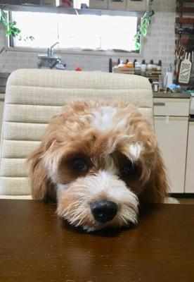 愛犬のおねだり