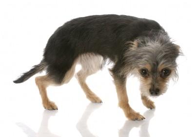 頭としっぽを下げて怯える犬