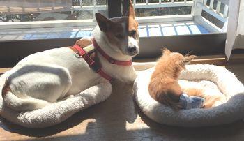2匹並んで日向ぼっこをしている犬達