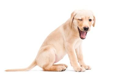 片目を閉じて口を開ける犬