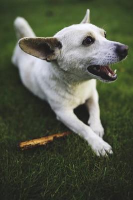 犬と木の棒