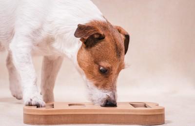 嗅覚ゲーム中の犬