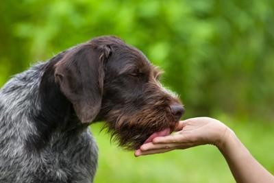 差し出された手を舐めている犬