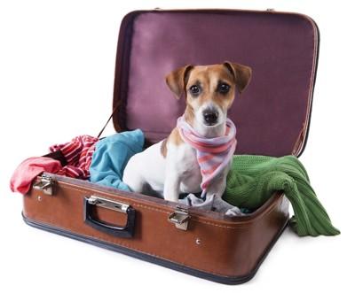 スーツケースの中に座って見つめる犬