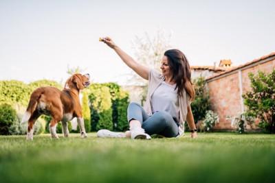 ビーグルと遊ぶ若い女性
